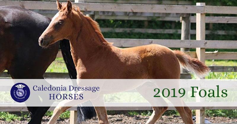 2019 foals UK
