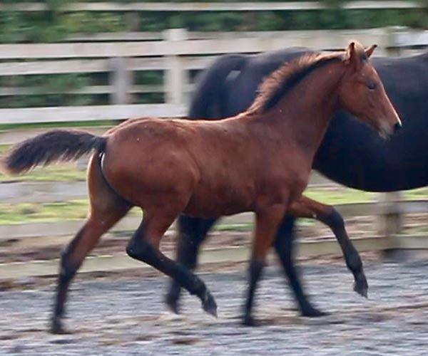 Colt Horse for Sale UK