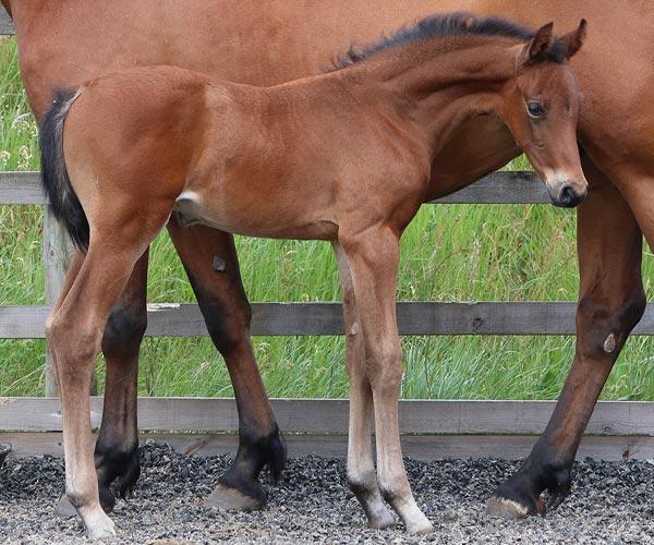 UK Colt Horses