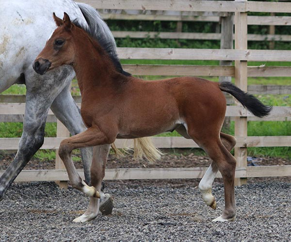 filly in scotland