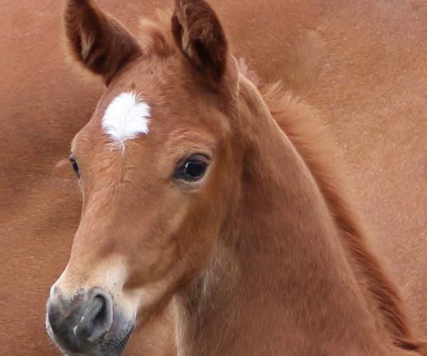 Horses for sale in UK