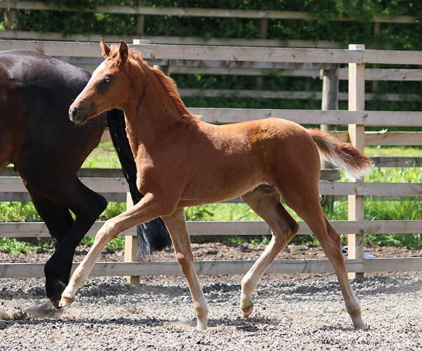 Horse for sale UK